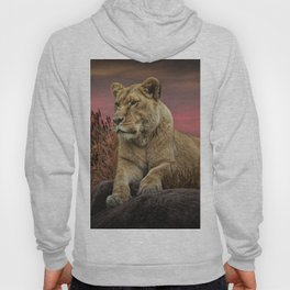 African Female Lion in the Grass at Sunset Hoody