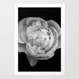 Peony Photography B&W Art Print