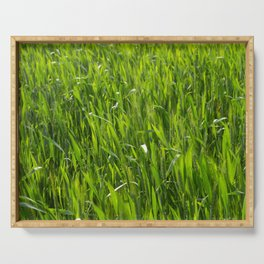 Green plants in a sown field Serving Tray