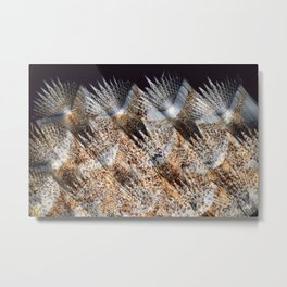 Skin of Common Sole Metal Print