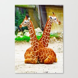 Giraffe Twins Canvas Print