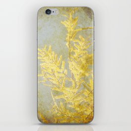 Golden Wattle iPhone Skin