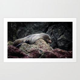 Seal at Cape Palliser, NZ Art Print