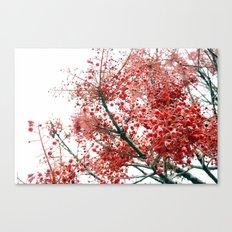 Star Berries Canvas Print