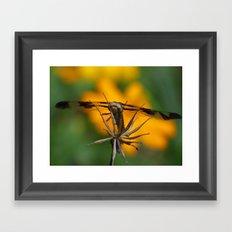 garden dragonfly 2017 Framed Art Print