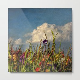 colored swords - field of Gladiola flowers Metal Print