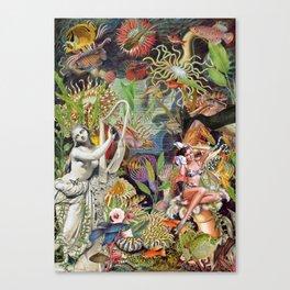 SARDINELLA Canvas Print