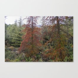 """""""Red tree"""". Deep forest at the mountains Canvas Print"""