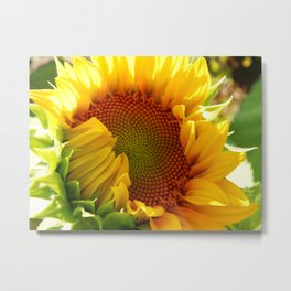 Sunflower design Metal Print