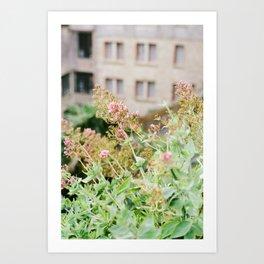 Flowers on Film Art Print