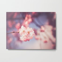 Pink Single Cherry Blossom Abstract Close Up Spring Nature Art Metal Print