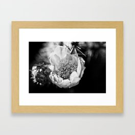 Cactus flower on a California hike Framed Art Print