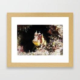 Triplespot Blenny Framed Art Print