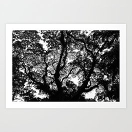 Singapore, Fort Canning. Tree Silhouette. Art Print