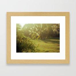 Evening Glow Framed Art Print
