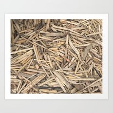 Lands End Drift Wood Art Print