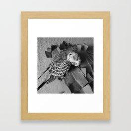 pude Framed Art Print