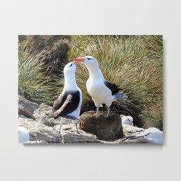 Albatross Bill Tapping Metal Print