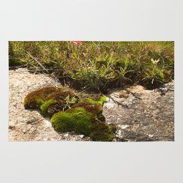 A Hill Country Oasis... Rug