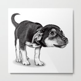 Cute cautious puppy wagging it's tail. Metal Print