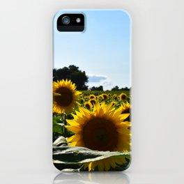 Sunflowers & Sunshine iPhone Case
