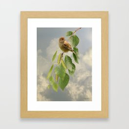 Indigo Bunting on Birch Tree Framed Art Print