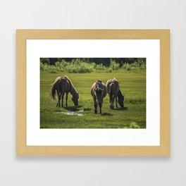 Assateague Adventure Tour Series - 4 Framed Art Print