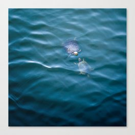 Turtles in love Canvas Print