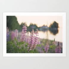 Summer eve by the lake Art Print
