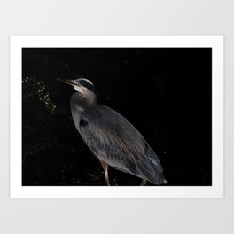 Heron at night Art Print