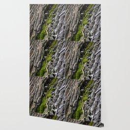 Tree trunk and mushrooms Wallpaper