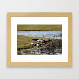 Big And Huge Alligators Framed Art Print