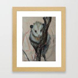 Cute Opossum Framed Art Print