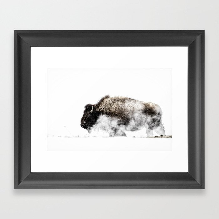 Bison Yellowstone Winter Gerahmter Kunstdruck
