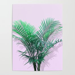 Palms on Musk Poster