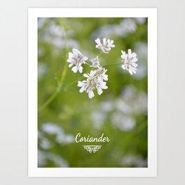 Coriander in flowers I Art Print