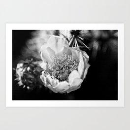 Cactus flower on a California hike Art Print