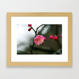 Plum Blossom Framed Art Print