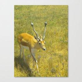 Care Free Canvas Print