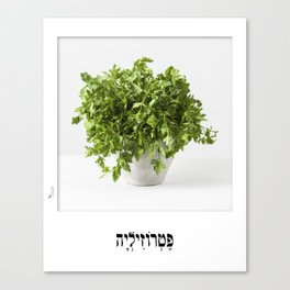 parsley herbal planter poster Canvas Print