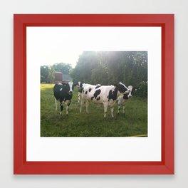 German Cows Framed Art Print