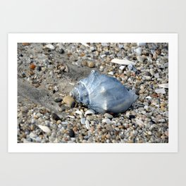 Conch shell Art Print