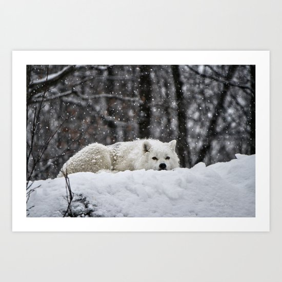 Dreams of warmer weather Art Print