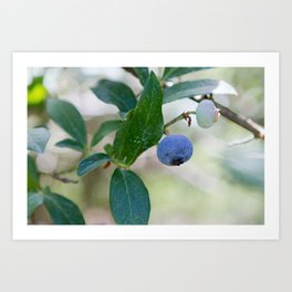 Blueberry Farm 2 Art Print