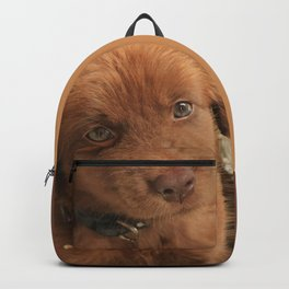 Potter's Cute Beginning: Hello New Home Backpack