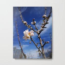 spring is coming Metal Print