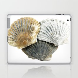 Shells Laptop & iPad Skin