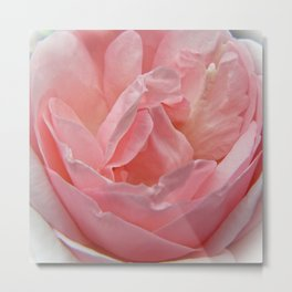 Peace Rose Dream Metal Print