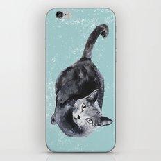 russian blue cat iPhone & iPod Skin