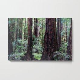 Muir Woods Metal Print